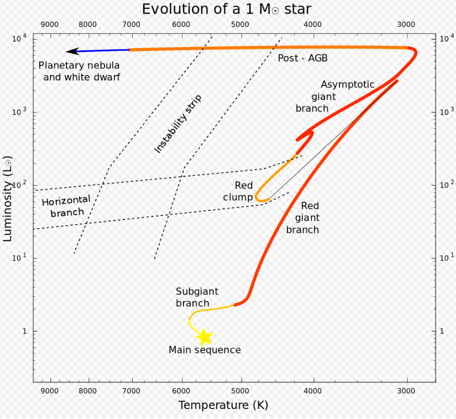 Our Sun, and any star with the same mass, will follow a common evolutionary path. Once it leaves the main sequence, after hydrogen burning is complete, it becomes a red giant, then a white dwarf. <Click to enlarge.> Image Credit: By Lithopsian - Own work, CC BY-SA 4.0, https://commons.wikimedia.org/w/index.php?curid=48486177