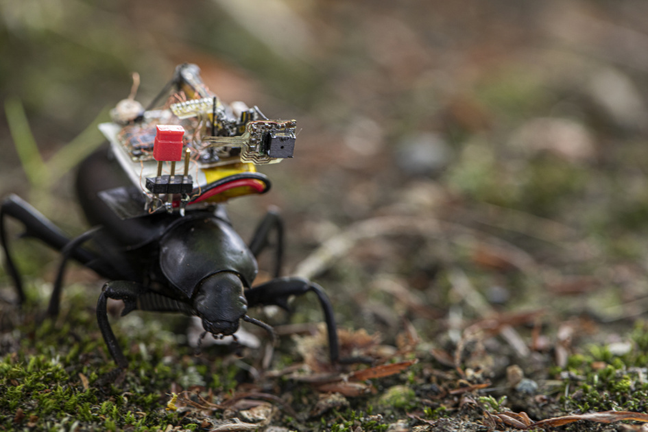 Robotic camera backpack shows a day in a beetle's life